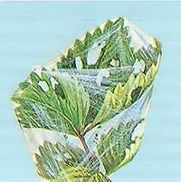 Лист, поврежденный листоверткой