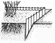 Как правильно выращивать малину
