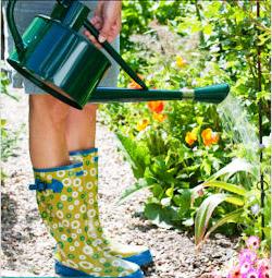 Полив растений из лейки