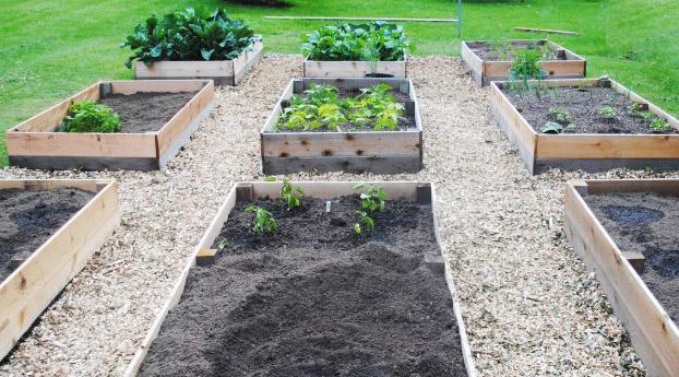 Севооборот культур в огороде