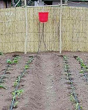 Как сделать капельный полив своими руками для огорода