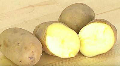 сорт картофеля Инара