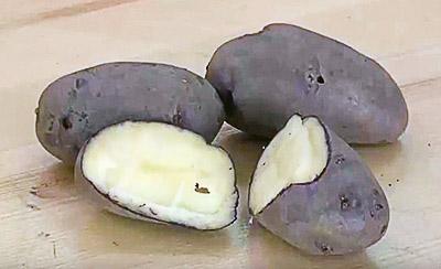 Картофель сорта «Голубой Дунай»