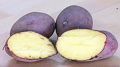 Картофель сорта «Мерлот»