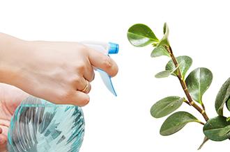 Опрыскивание растений перекисью водорода