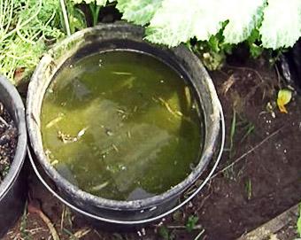 Как применять зеленое удобрение