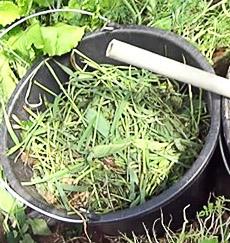 Зелёное удобрение из крапивы и травы