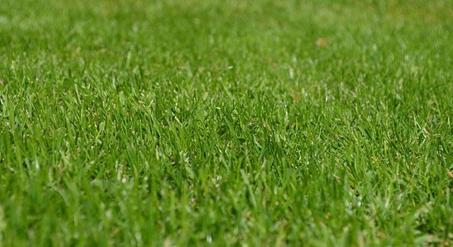 Зеленый подстриженный газон