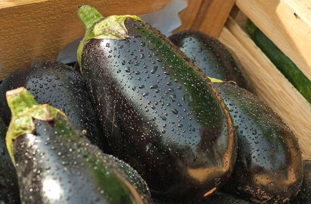 Собранный урожай баклажан