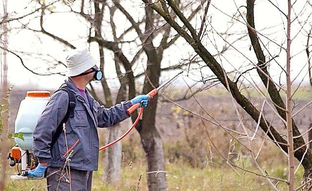 Мужчина опрыскивает деревья в респираторе