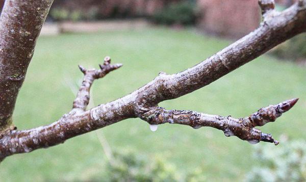 Делая осеннюю обработку деревьев, тщательно опрыскивайте все ветви