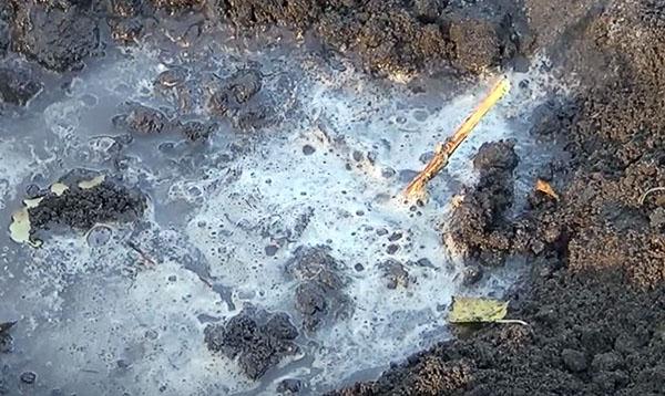 Осенняя посадка черной смородины
