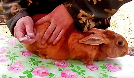 Мужчина делает укол кролику