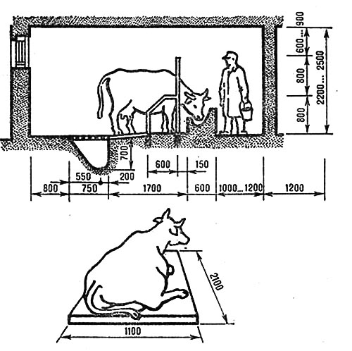 Стойло для коровы, размеры