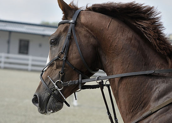Гнедая лошадь в упряжи