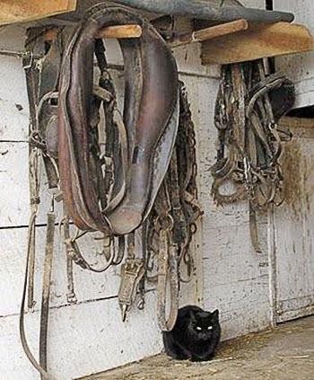 Упряжь весит на деревяных вешалках