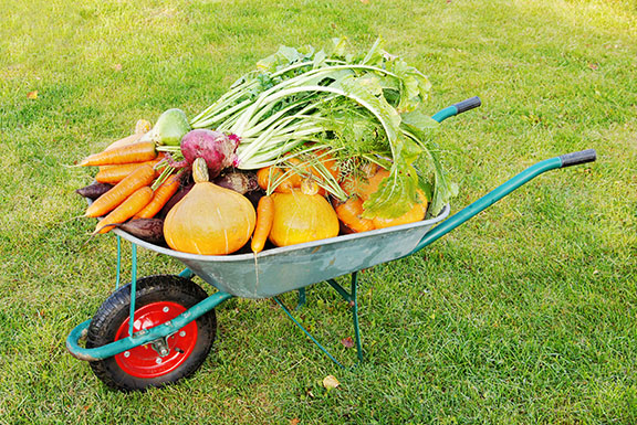 Садовая тачка, груженая овощами
