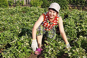 Женщина обрабатывает плантацию клубники