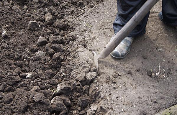 Осенняя перекопка почвы в огороде