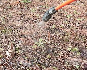 Опрыскивание сада от клещей