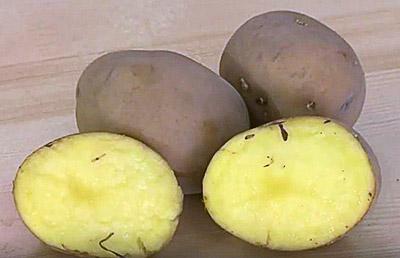 Картофель сорта «Венди»