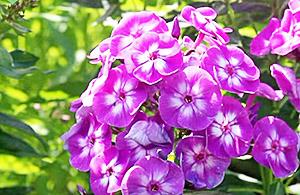 Чем подкормить цветы в саду