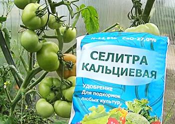 vershinnaya_gnil_kalc_selitra