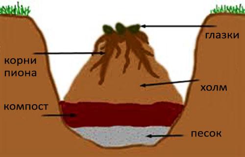 Посадочная яма для пиона