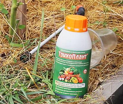 Препарат Трихоплант для обеззараживания почвы в огороде осенью