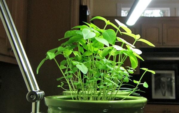 Дополнительное освещения для зелени зимой в квартире