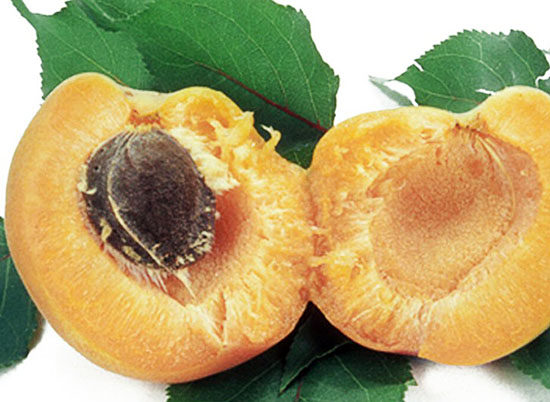 Плод абрикоса с косточкой
