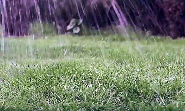 Полив газона после подкормки осенью