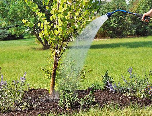 Влагозарядный полив деревьев осенью