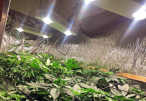 Подсветка растений в домашних условиях светодиодными лампами