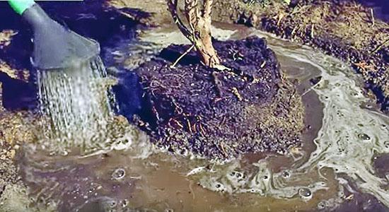 Засыпав яму наполовину, вылейте в неё ведро воды, чтобы грунт осел