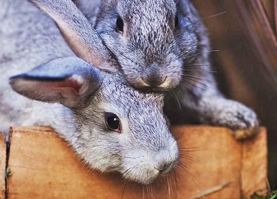 Два кролика сидят вместе