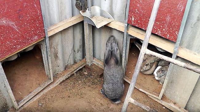 Устройство ямы для разведения кроликов