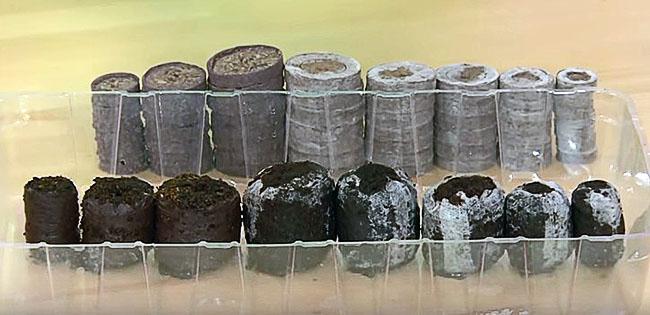 Торфяные таблетки разных размеров в сухом и разбухшем виде