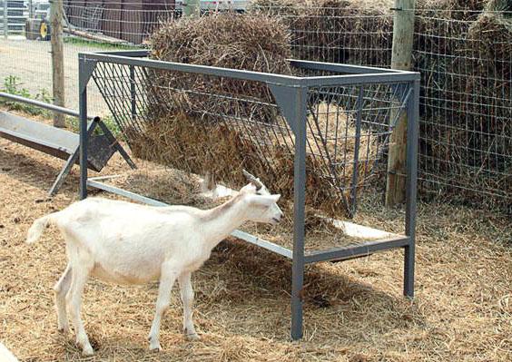 Вариант кормушки для кормления коз сеном