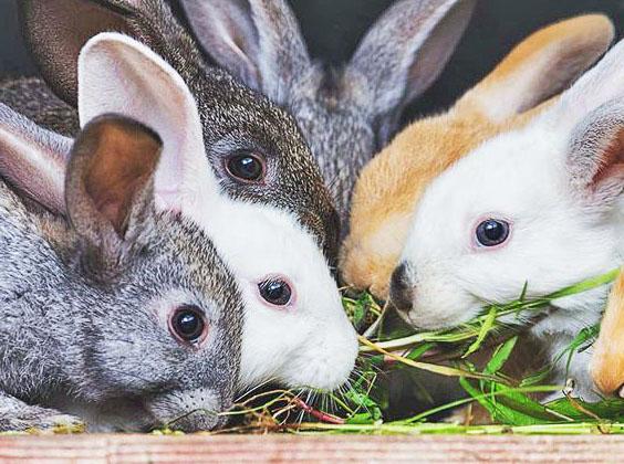 Кролики едят зеленую траву