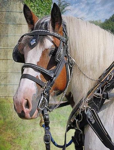 Лошадь с уздечкой