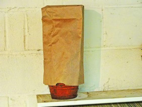 Герань зимой укрытая пакетом