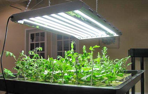Досвечивание рассады лампами дневного света