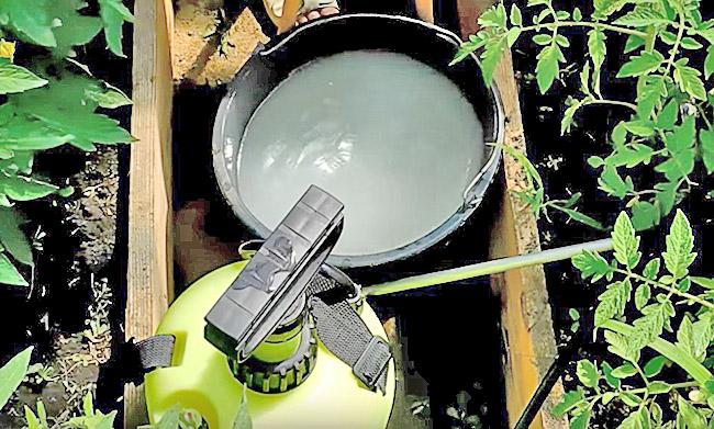 Приготовленный раствор молока и йода для обработки помидоров