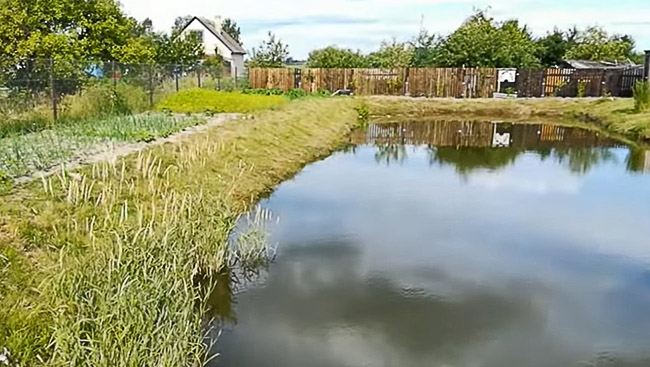 Небольшой водоем на сажовом участке