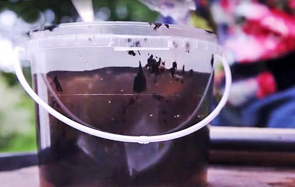 Фитоспорин, разведенный в воде